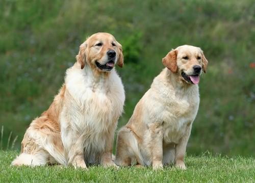 vieux-chiens-3
