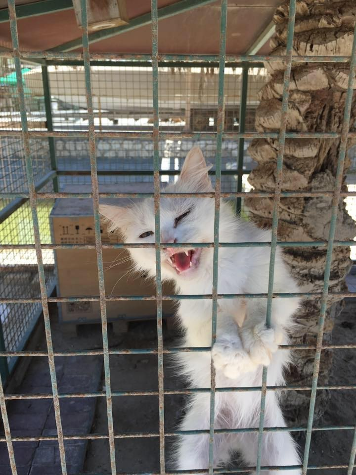 zoo-chats-chiens-bahrein-1