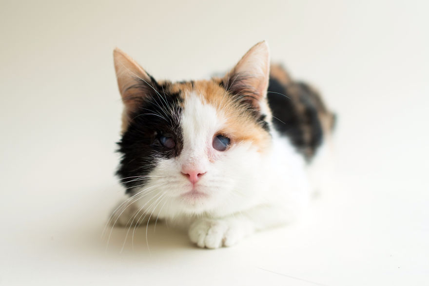 blind-cats-10