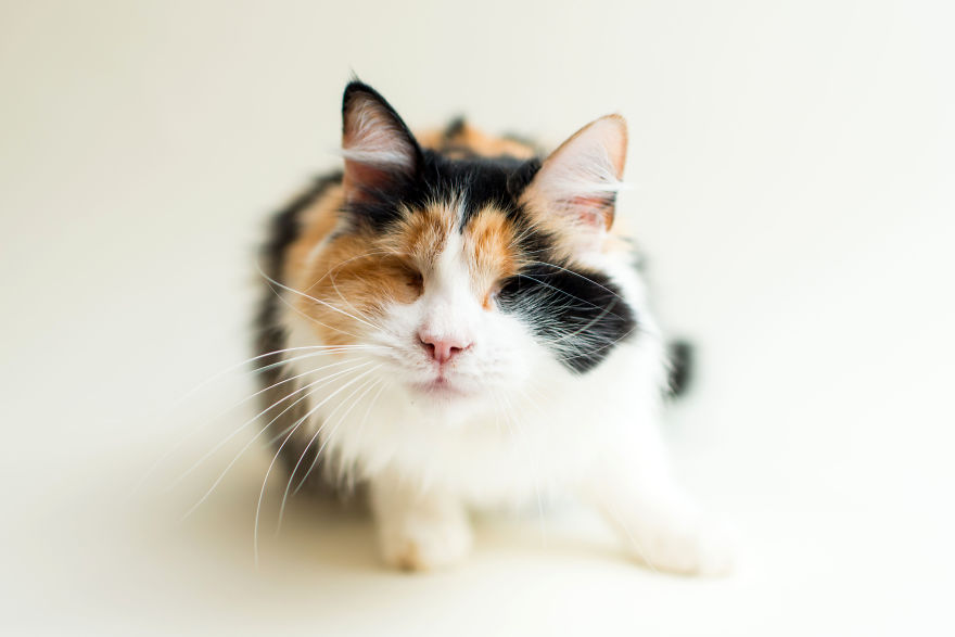 blind-cats-2