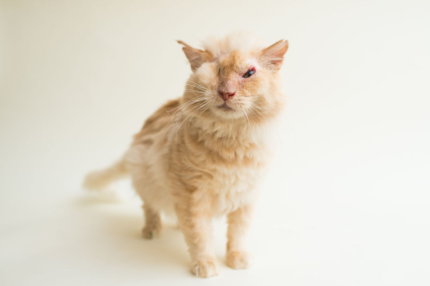 blind-cats-3