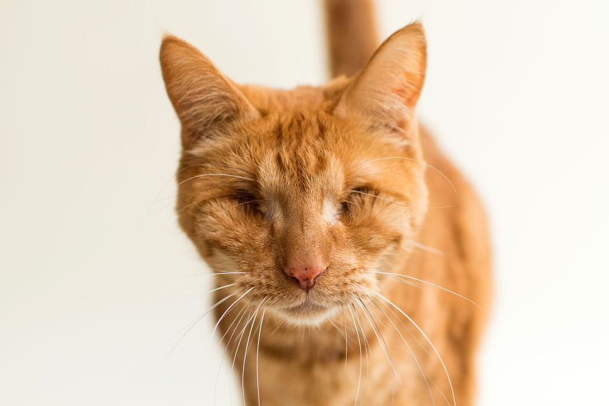 blind-cats-6