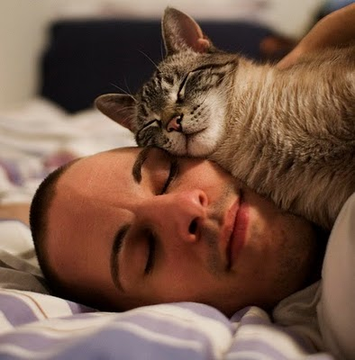 The 9 Rules Every Cat Imposes On His Humans