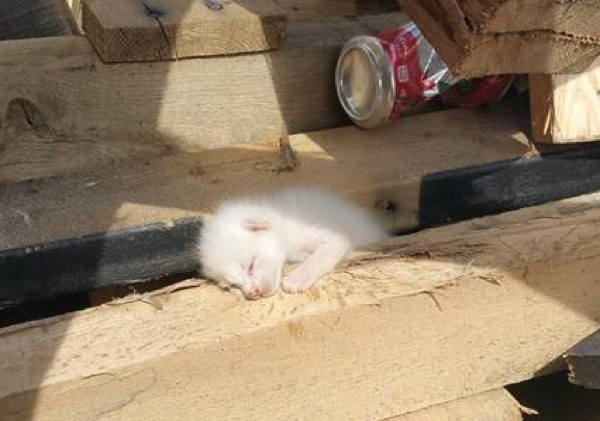 chatons-planches-bois-1
