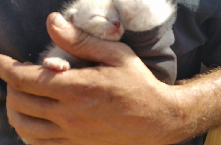 chatons-planches-bois-3