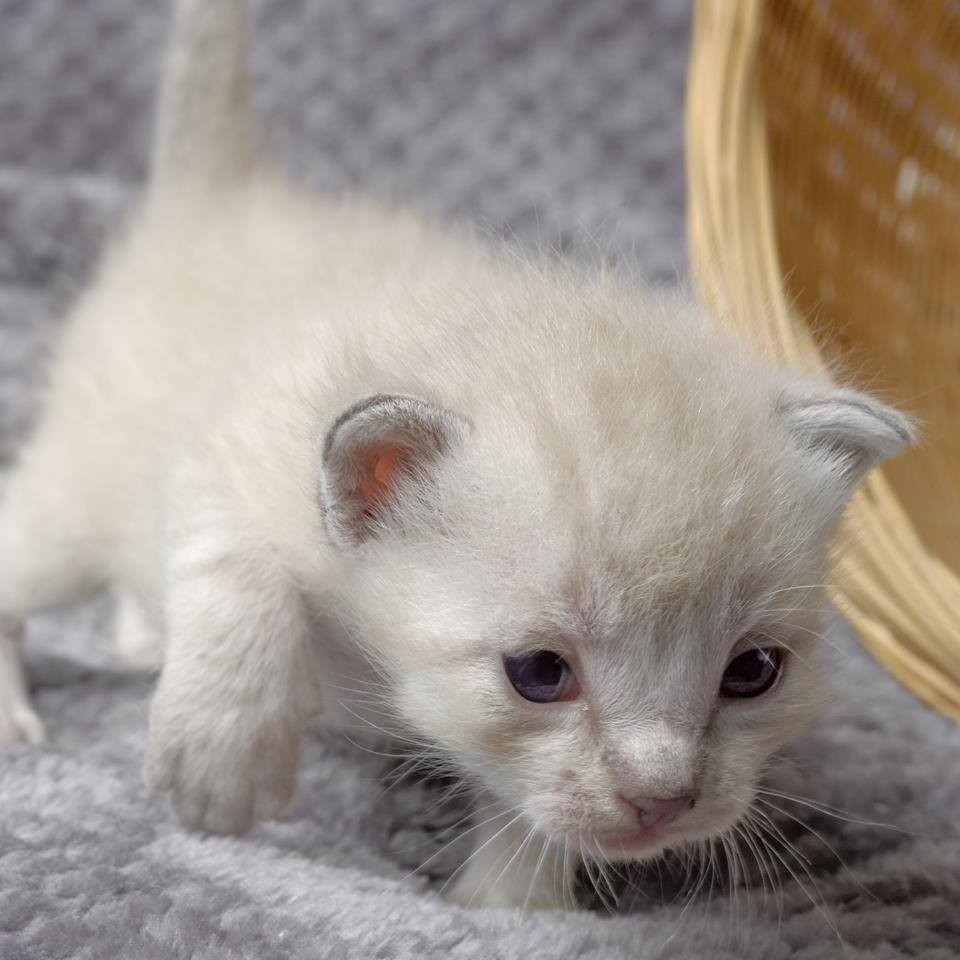 chatons-planches-bois-6