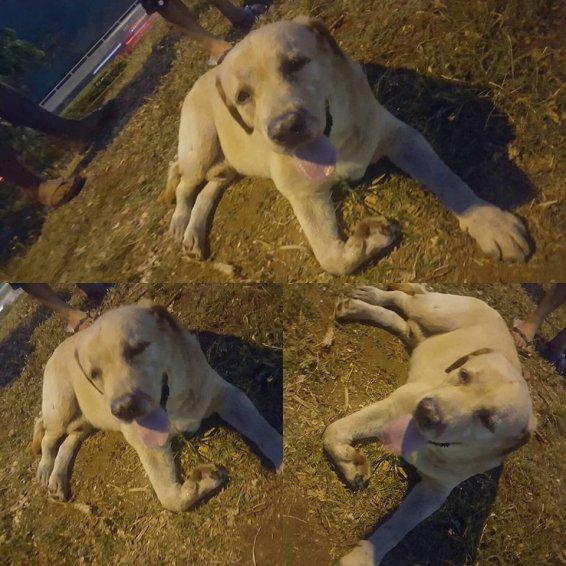 chien-polynesie-3