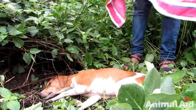 dog-rescue-brain-damaged-3