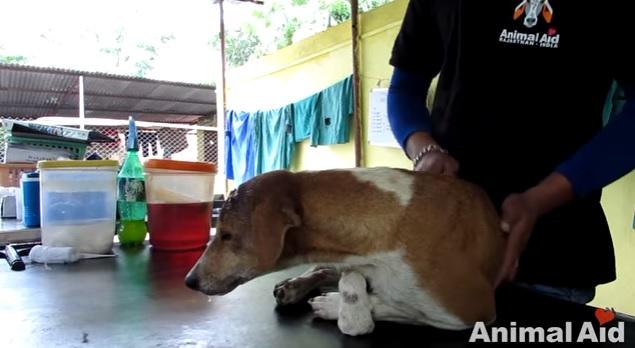 dog-rescue-brain-damaged-4