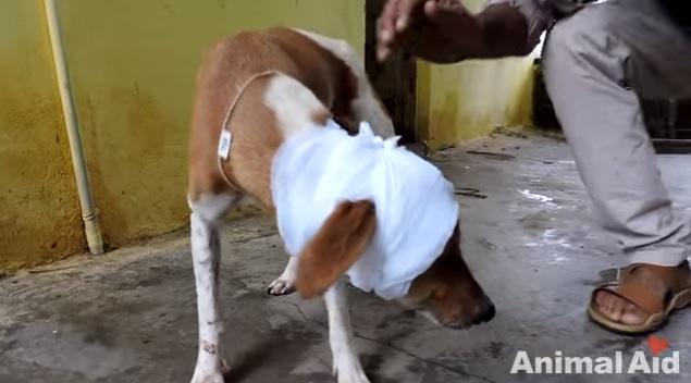 dog-rescue-brain-damaged-5