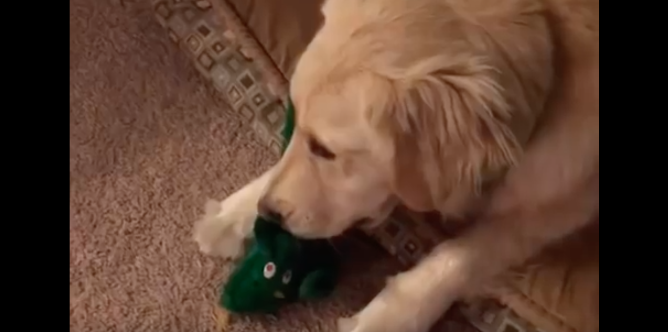 gumby-halloween-golden-retriever-reaction-2