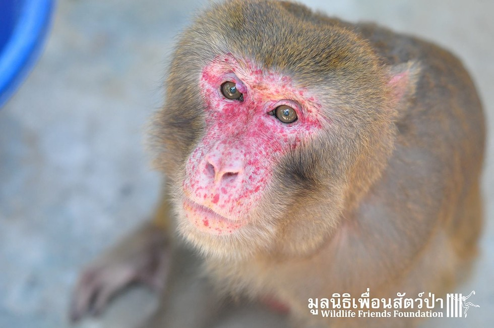 joe-monkey-25-10