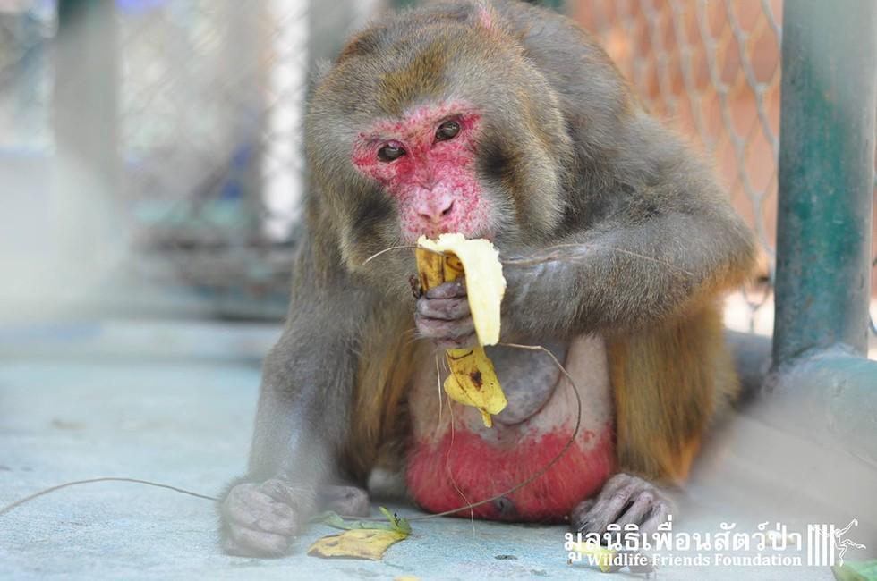 joe-monkey-25-11