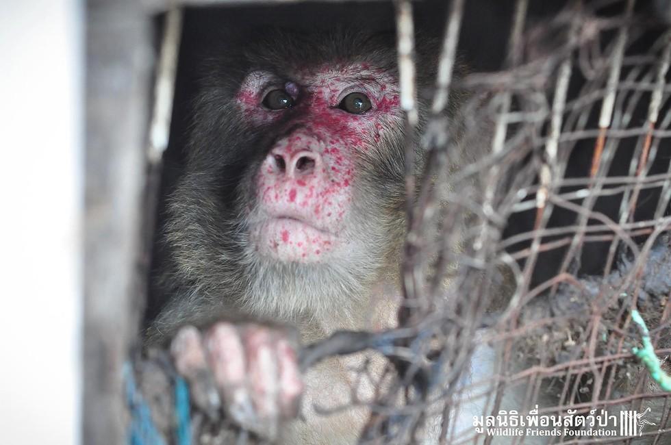 joe-monkey-25-3