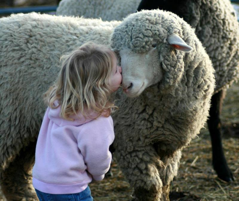 mouton-petite-fille-L214