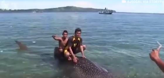 requin-baleine-touristes-1