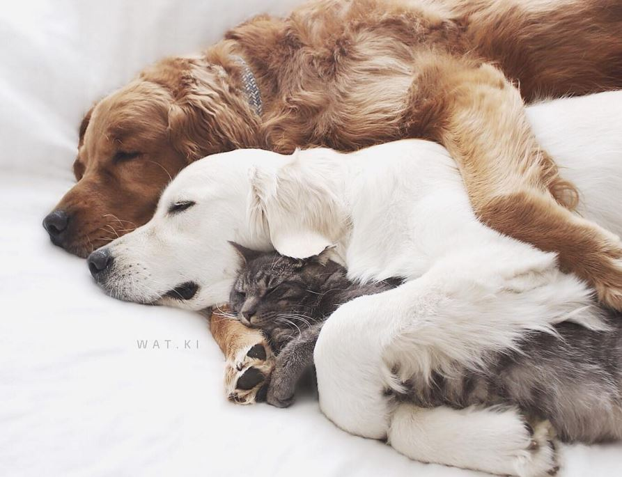 trio-hug-dog-2