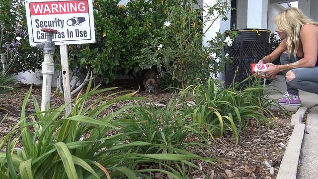 angelica-chien-cimetiere-abandon-1