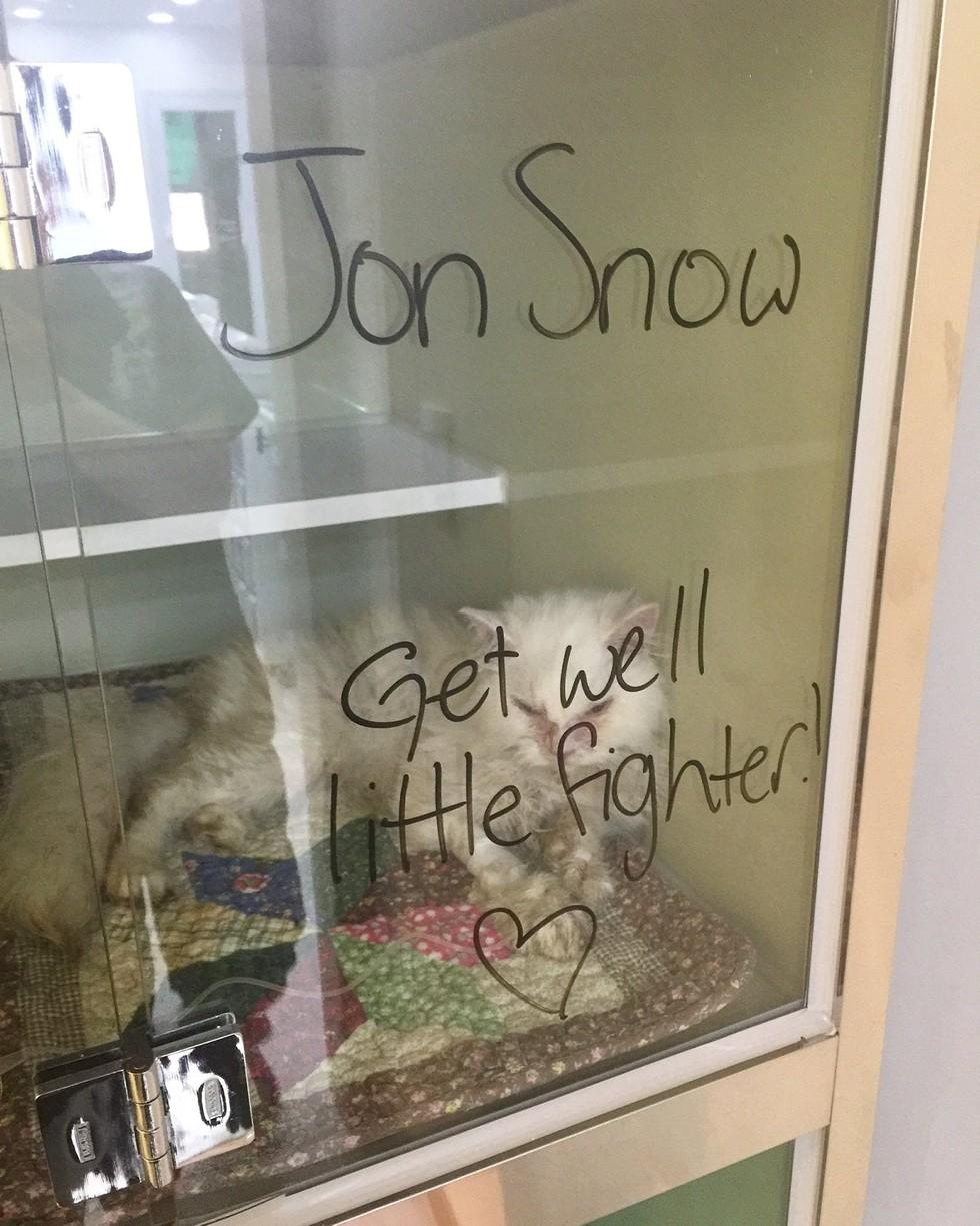 jon-snow-chat-corée-4