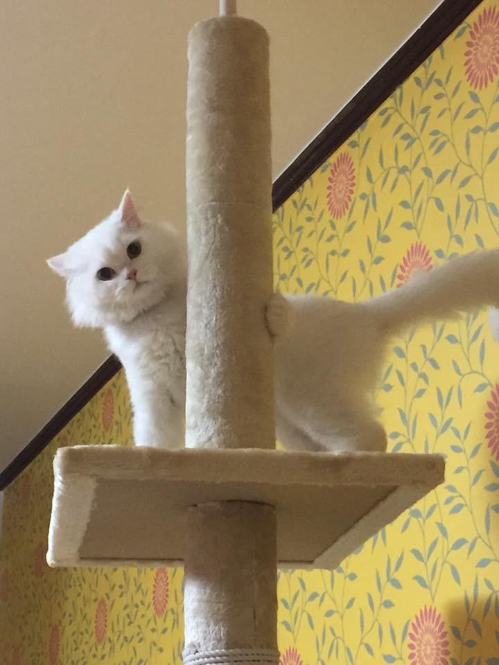 jon-snow-chat-corée-6