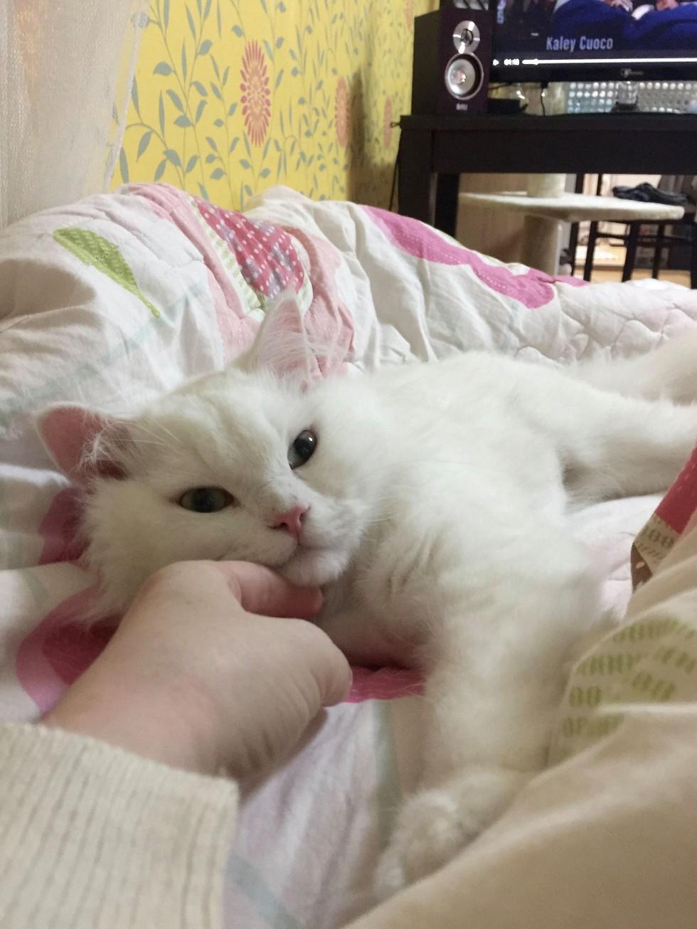 jon-snow-chat-corée-7