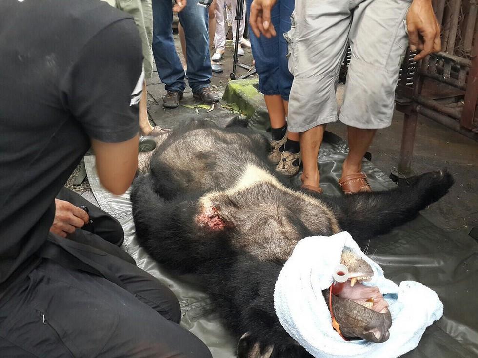 kujira-ours-ferme-bile-2