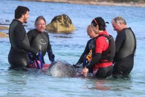 minkewale-tasmanie-2