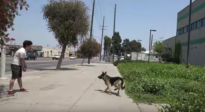 mozart-chien-clinique-sauvetage-2
