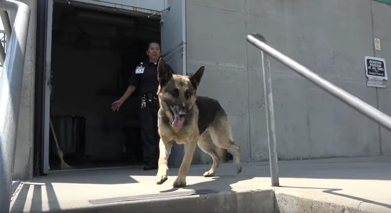 mozart-chien-clinique-sauvetage-4