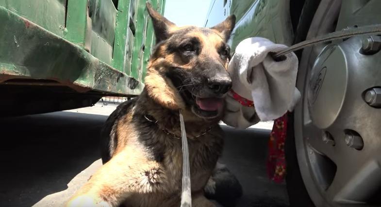 mozart-chien-clinique-sauvetage-5