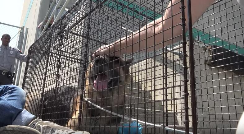 mozart-chien-clinique-sauvetage-6
