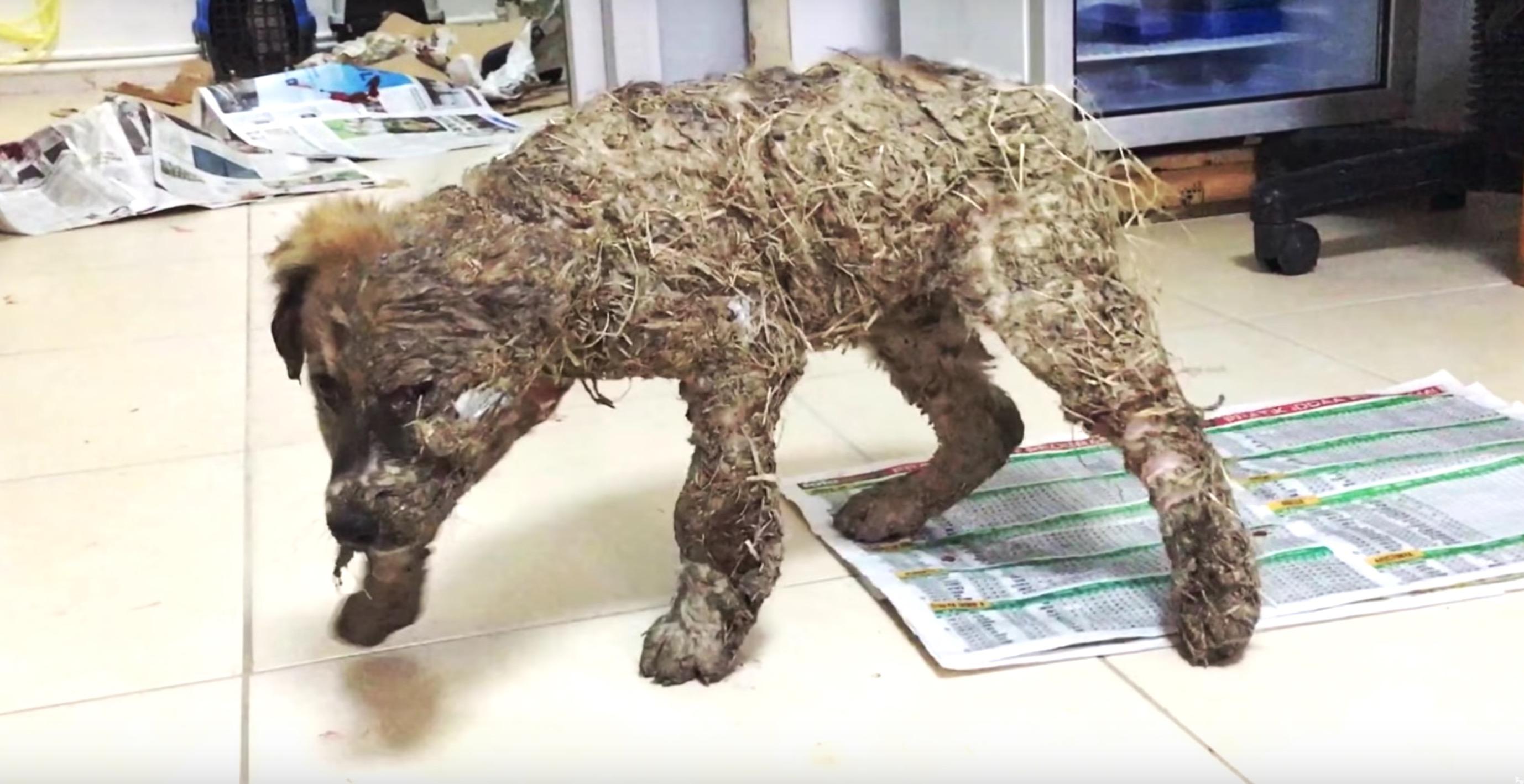 pascal-chien-colle-cruaute-7