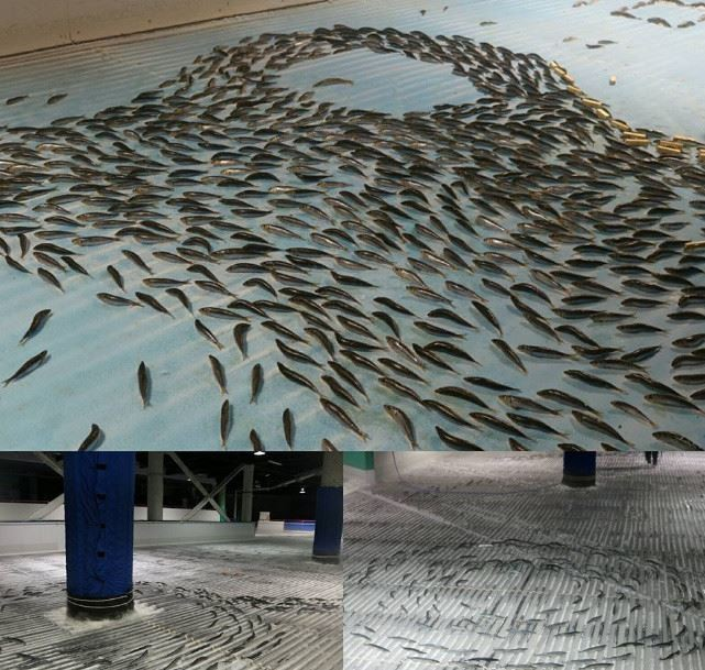 patinoire-japon-poissons-scandale-9