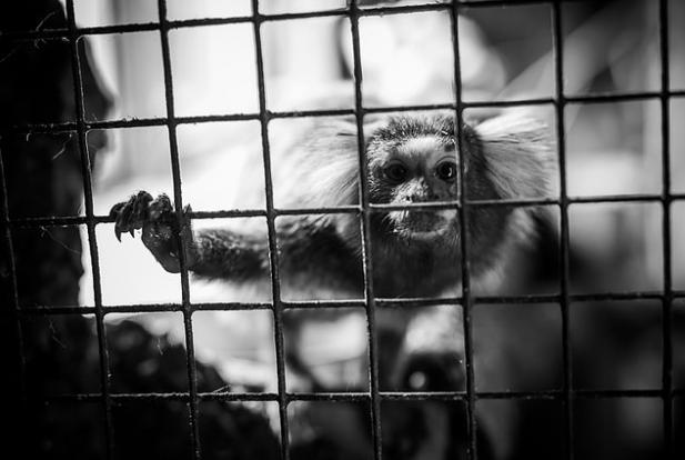 photos-cruaute-zoos- 1