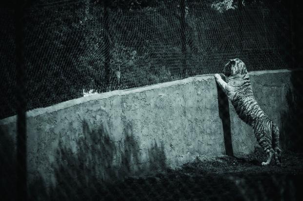photos-cruaute-zoos-10