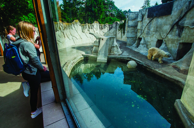 photos-cruaute-zoos-11