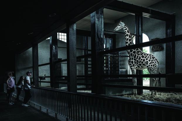 photos-cruaute-zoos-12