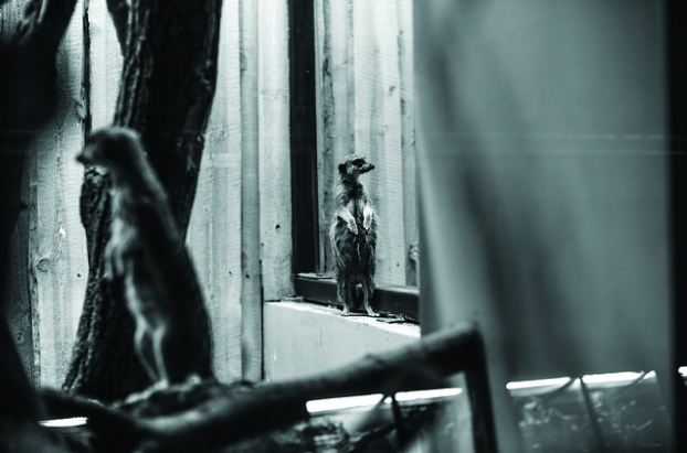 photos-cruaute-zoos-13