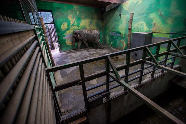 photos-cruaute-zoos-14
