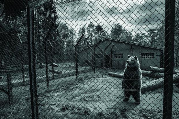 photos-cruaute-zoos- 2