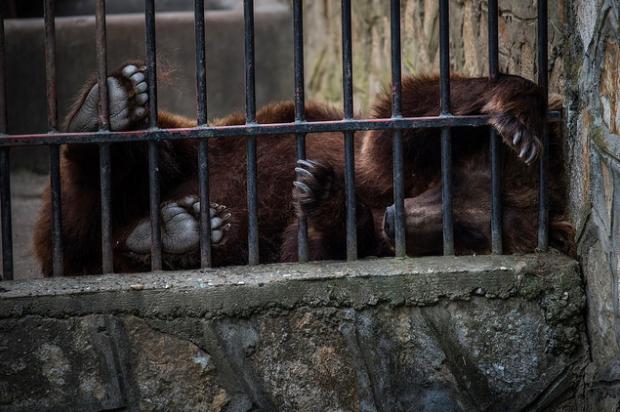 photos-cruaute-zoos- 3
