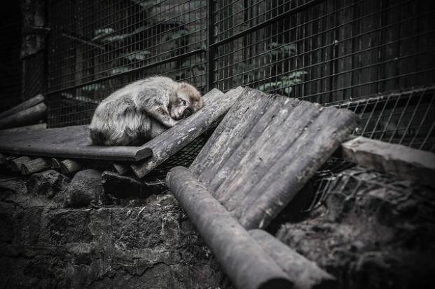 photos-cruaute-zoos- 4