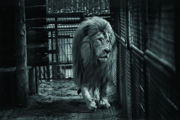 photos-cruaute-zoos-6