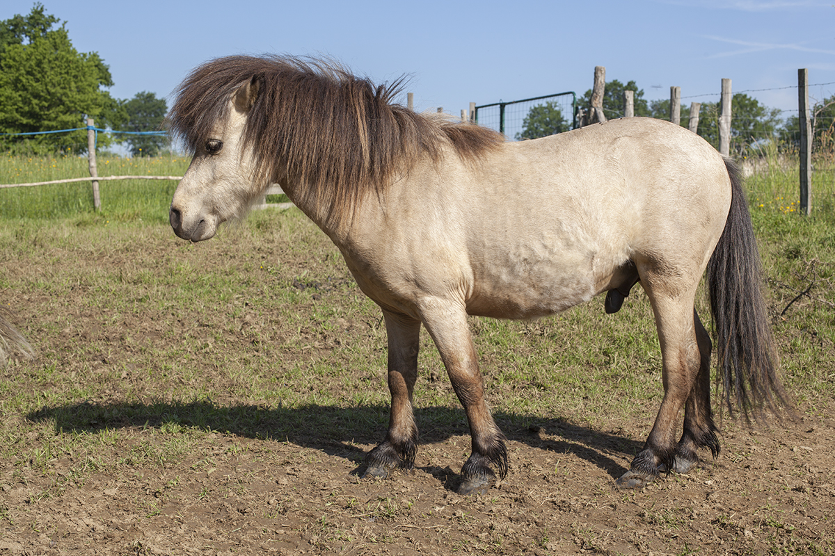 poney-abandonne-1