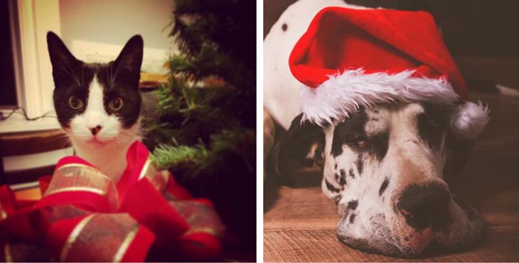 Animal-cadeau-noel