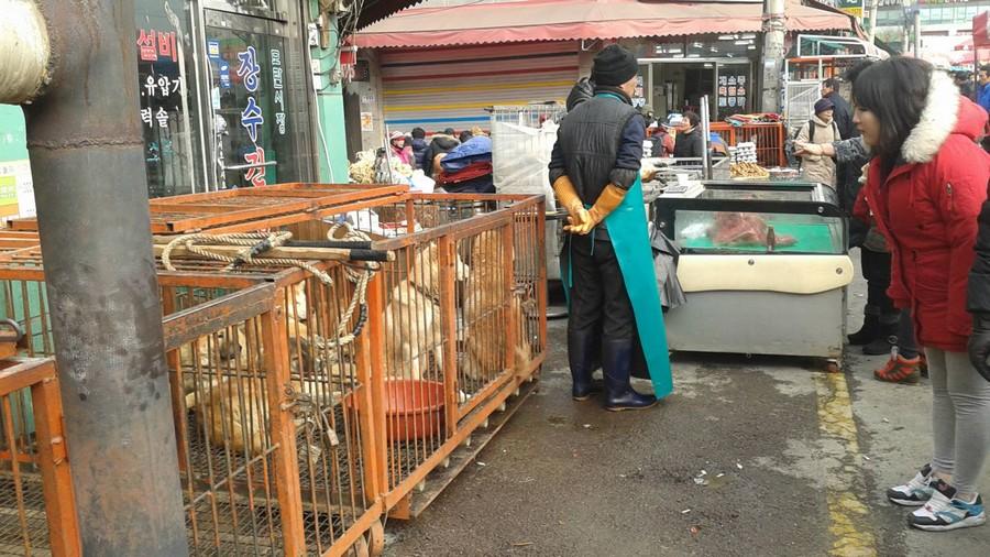 Seongnam-marche-viande-chien-interdiction-2
