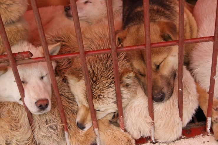 Seongnam-marche-viande-chien-interdiction-3