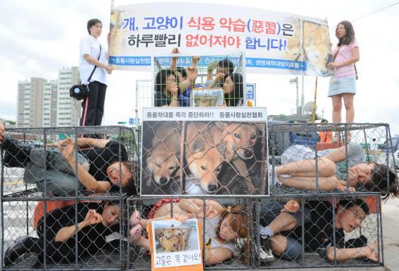 Seongnam-marche-viande-chien-interdiction-4
