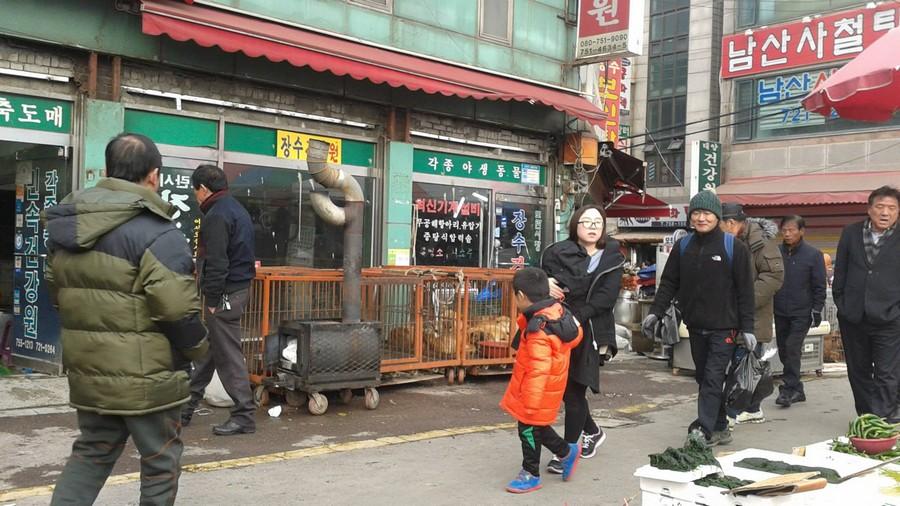 Seongnam-marche-viande-chien-interdiction-7