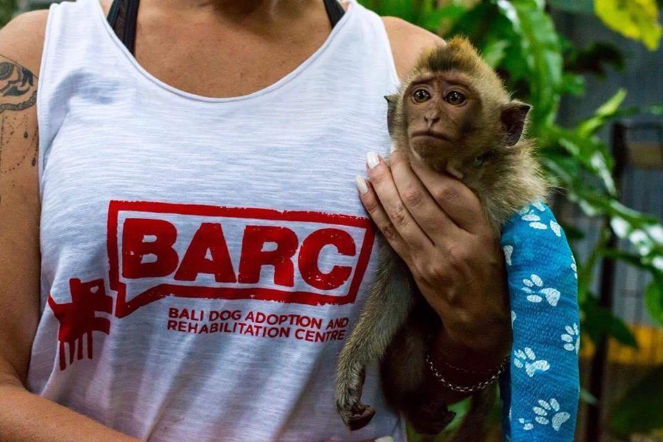almond-macaque-crabier-battu-bali-1